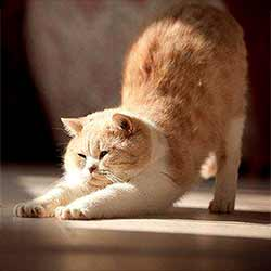 Кошка потягивается