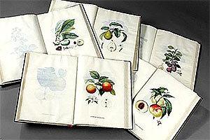 О плодовых деревьях - Анри Луи Дюамель дю Монсо