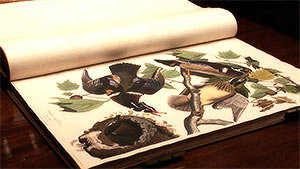 Птицы Америки - Джон Одюбон