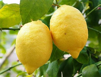 Лимон - полезно для печени